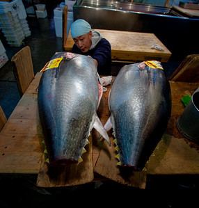 Cleaning the tuna - Tsukiji